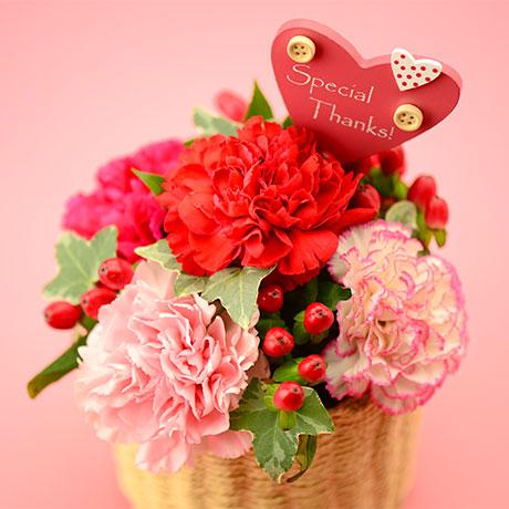 母の日カーネーション花と和菓子どら焼き