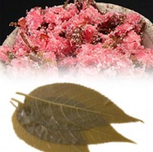 塩漬け桜の拘り